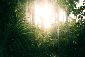 The jungle of Pulau Weh