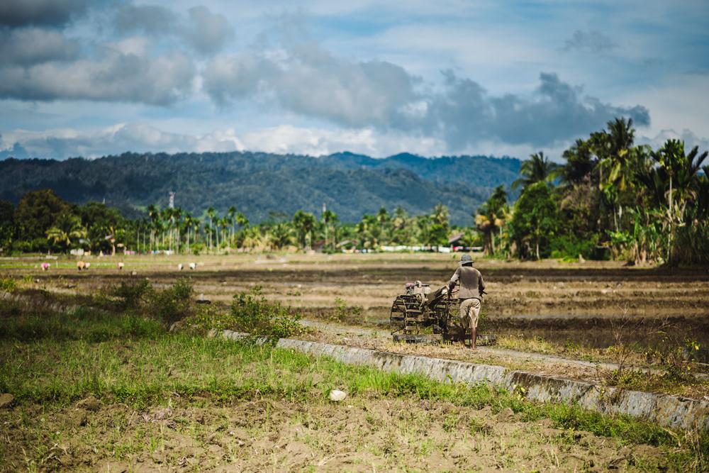 Field work in Bukit Lawang