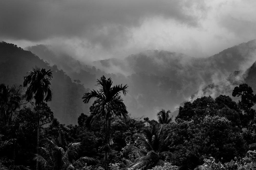 Jungle of Bukit Lawang